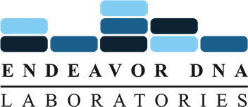 Endeavor DNA Logo